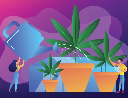 Stages Of The Marijuana Plant Growth Cycle