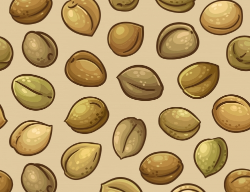 Cannabis Seeds 101: A Guide For Growers