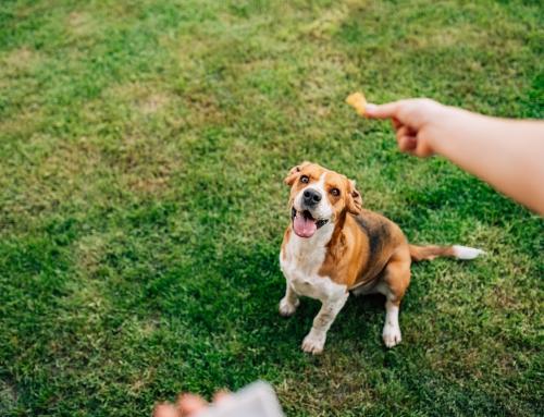 3 Ways CBD Can Benefit Dog Health